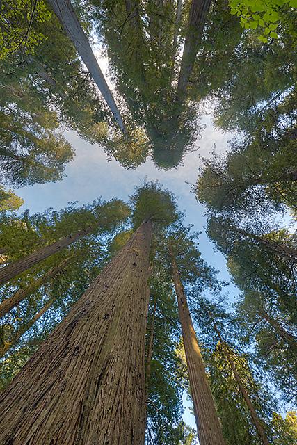 Coastal Trail, Del Norte Coast Redwoods State Park, California (Photo courtesy: Kerry Mark Leibowitz)