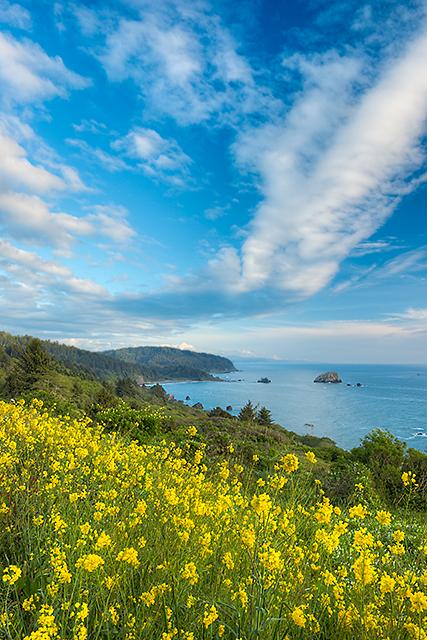 Pacific Coast, Del Norte Coast Redwoods State Park, California (Photo courtesy: Kerry Mark Leibowitz)