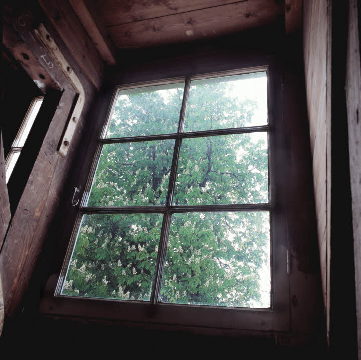 A view of the Anne Frank Tree from the apartment where she and her family were in hiding (Copyright Anne Frank House, photographer Cris Toala Olivares)