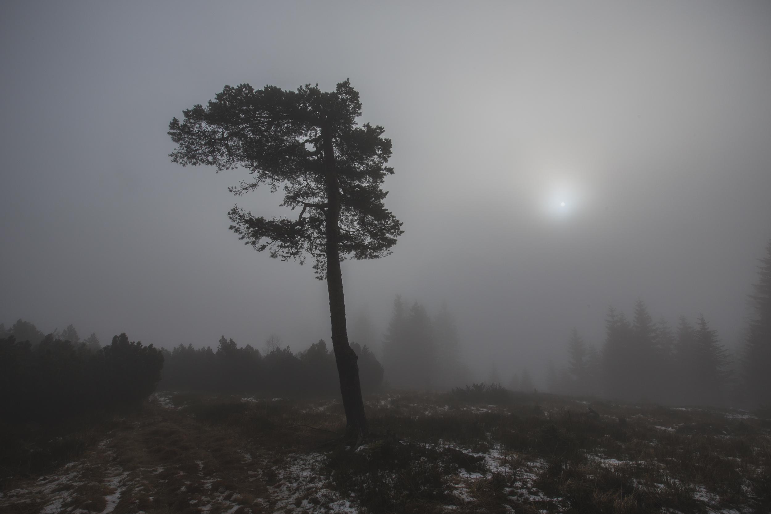 140112_winter_galerie_01.jpg