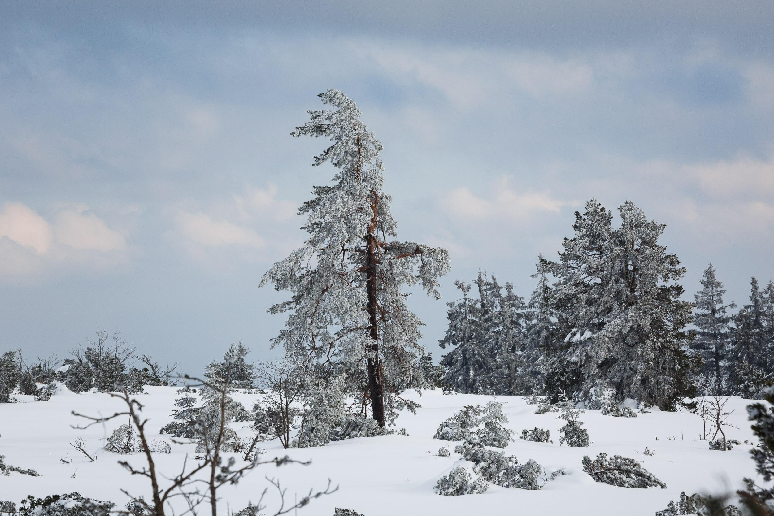150228_winter_galerie_33.jpg