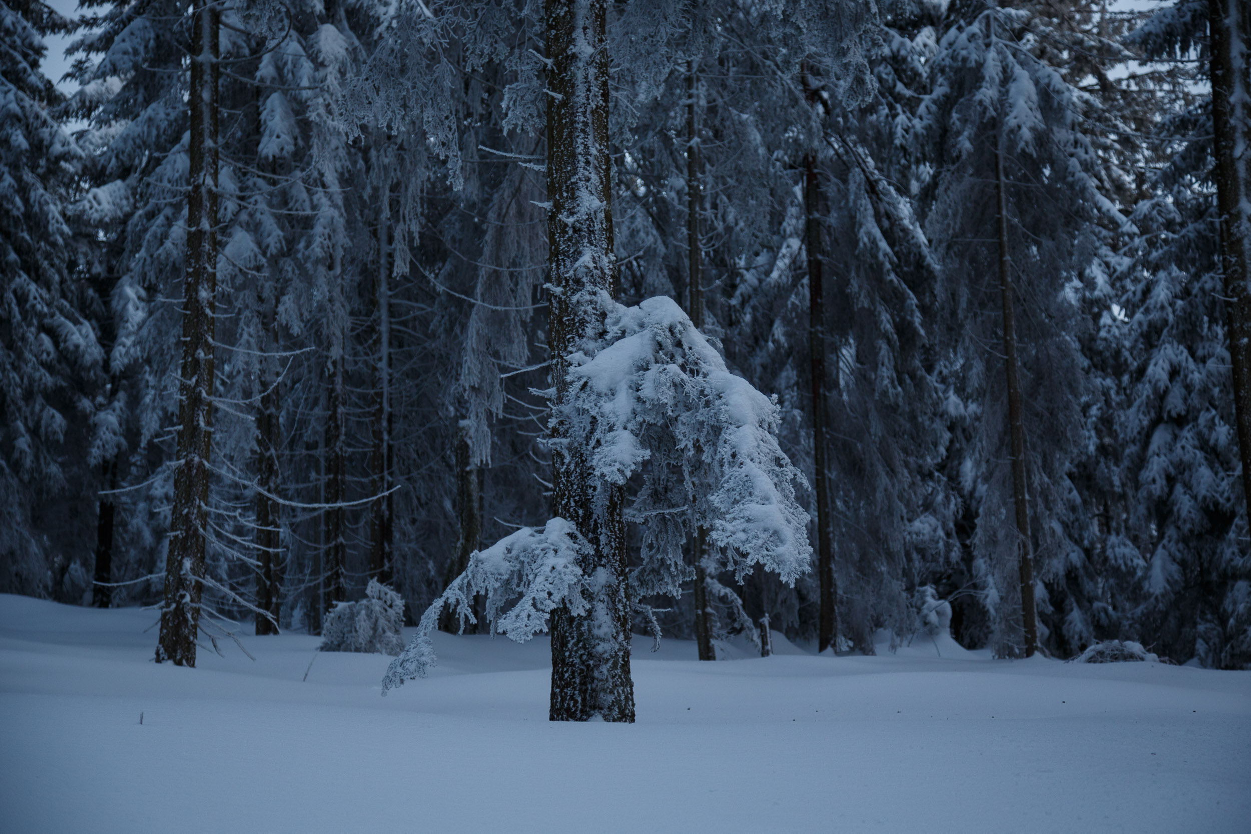 150301_winter_galerie_42.jpg