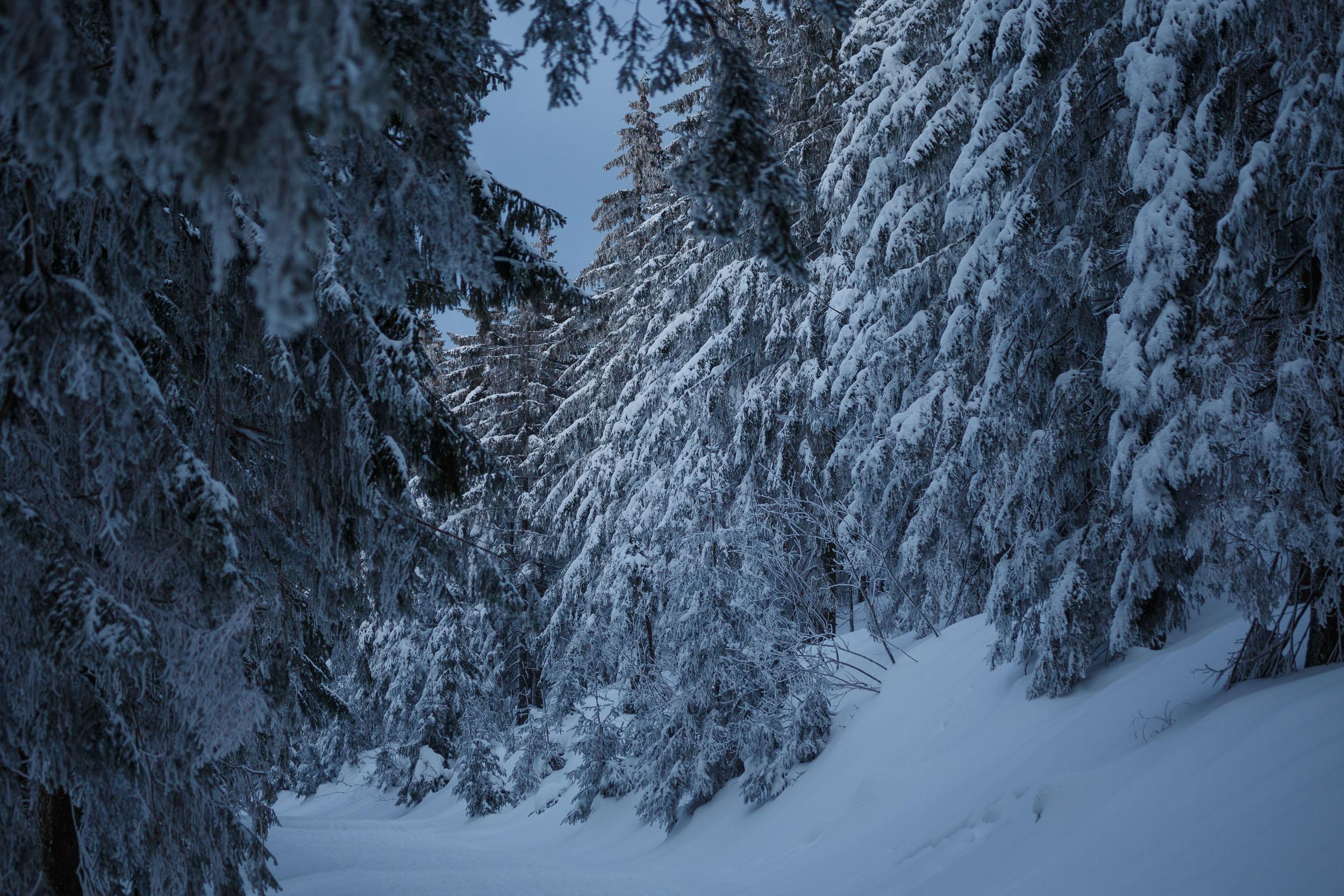 150301_winter_galerie_43.jpg