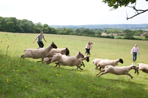Test your team's collaborative skills by chasing sheep around a field. Teambuilding at Folly Farm is more fun, and more revealing, than you think!