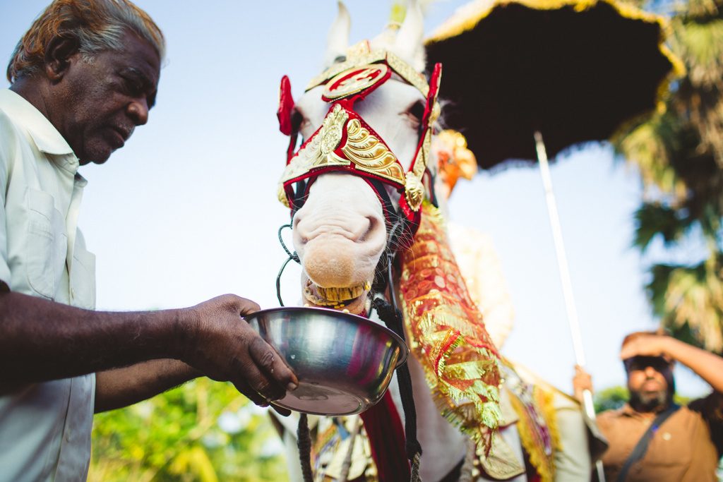 zuriwhitesands-goa-destination-wedding-photography-intocandid-29.jpg