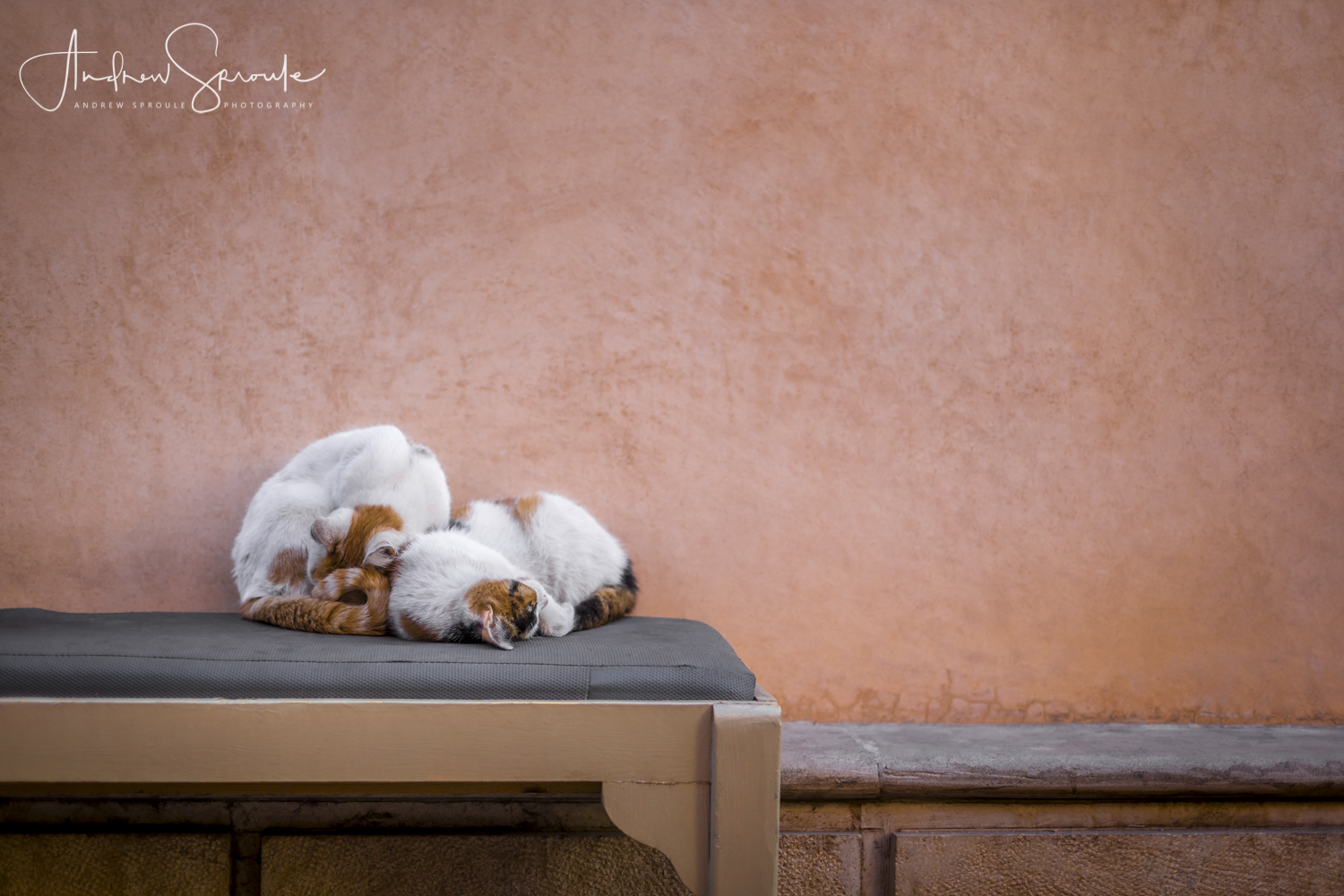 Andrew Sproule | Adventure and Wildlife Photographer | Marrakech, Morocco | Cats asleep in the Medina