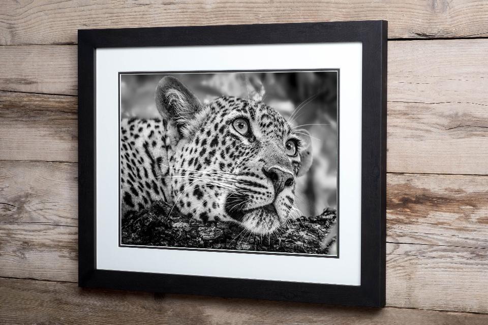 Andrew Sproule | Wildlife & Adventure Photographer | Fine Art Wildlife Prints | Eternal Collection | Photo © Andrew Sproule