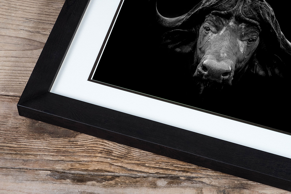 Andrew Sproule | Wildlife & Adventure Photographer | Fine Art Prints | Eternal Collection | Photo © Andrew Sproule