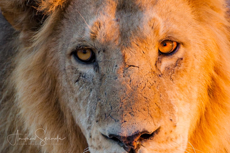 Andrew Sproule | Adventure & Wildlife Photographer | Africa Gallery