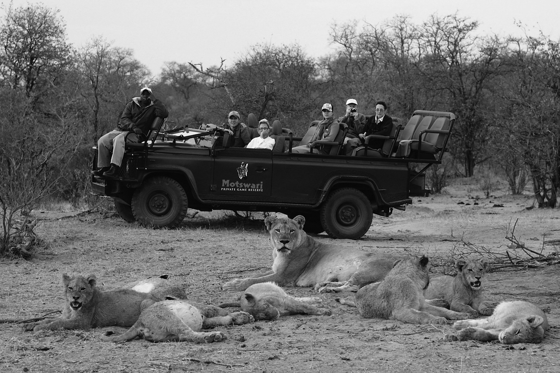 A typical Southern Africa Safari Vehicle | Image © Motswari Private Game Reserve, Timbavati