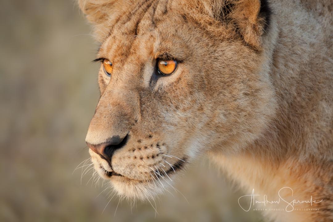 serengeti-wildlife-photo-safari-andrew-sproule-photography.jpg