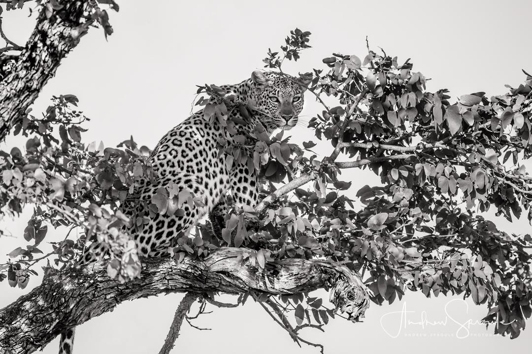 sri-lanka-wildlife-photo-safari-andrew-sproule-photography.jpg