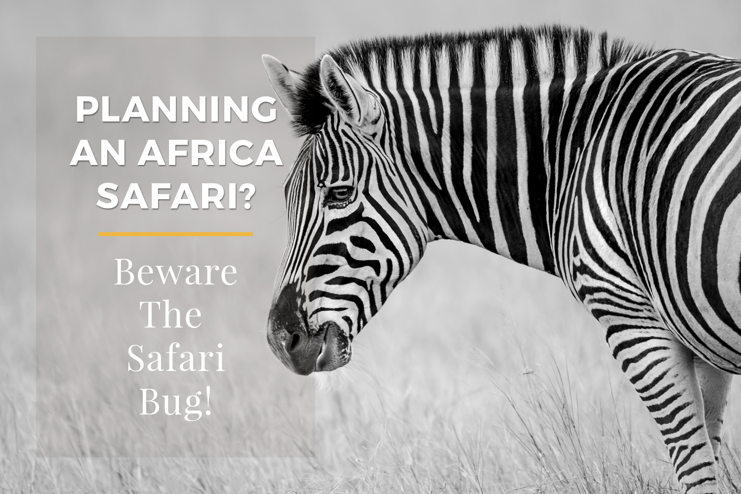 Andrew Sproule Photography | Planning An Africa Safari? | Beware the Safari Bug!