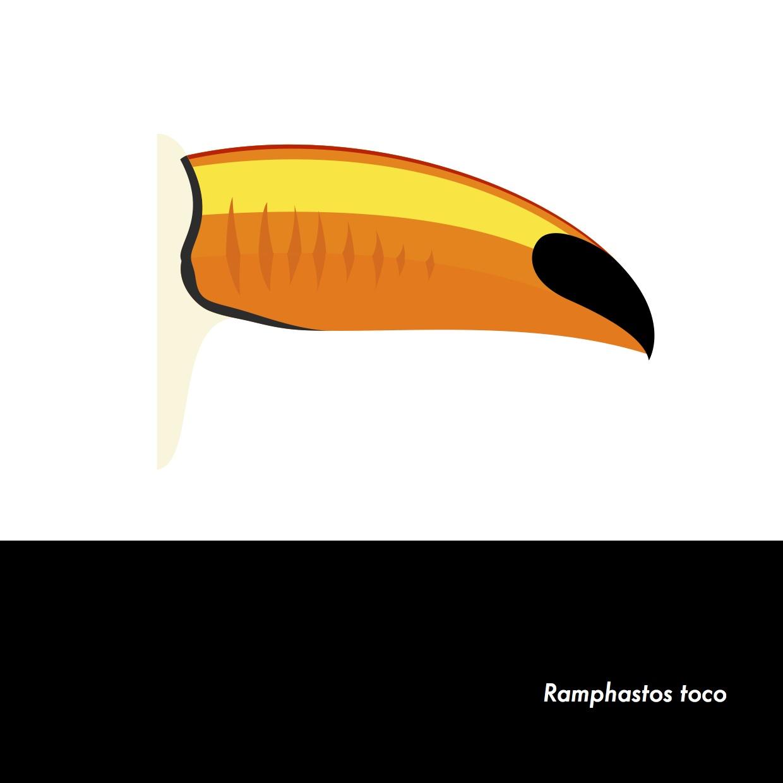 01-RamphastosToco.jpeg