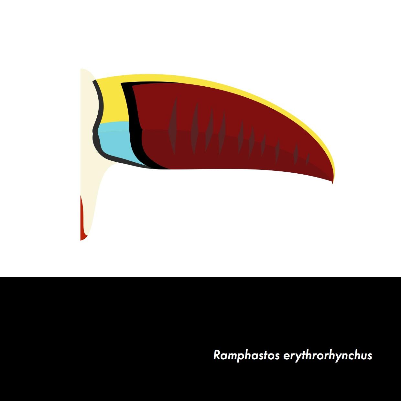 06-RamphastosErythrorhynchus.jpeg