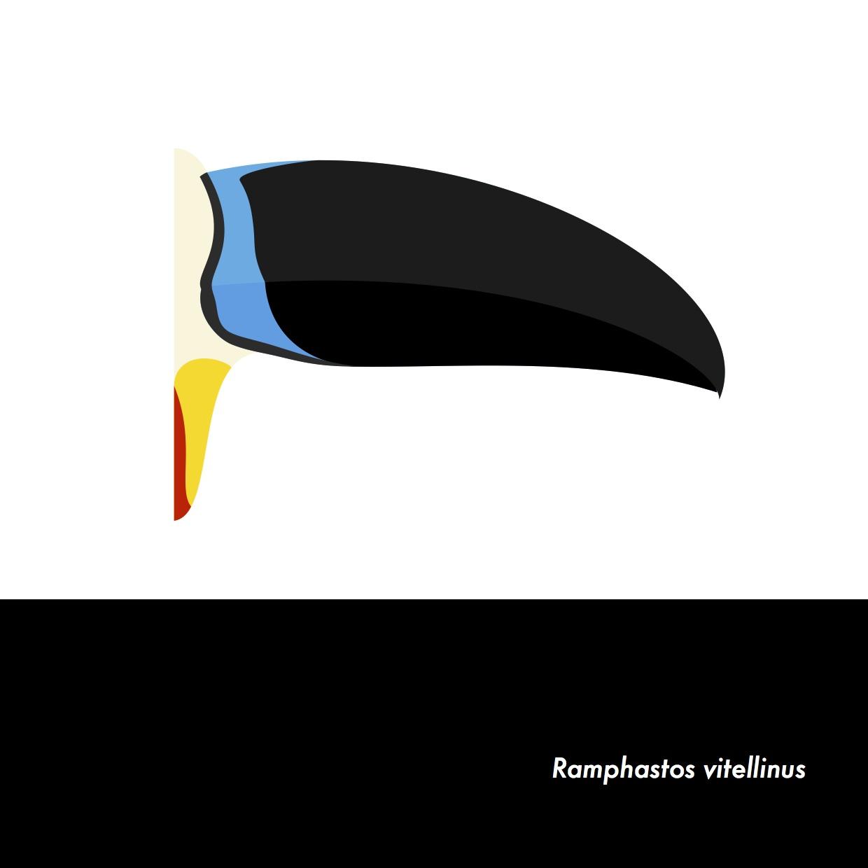 13-RamphastosVitellinus.jpeg