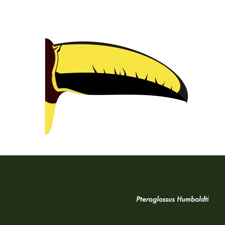 22-PteroglossusHumboldti.jpeg