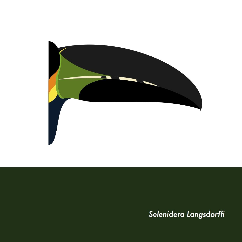 33-SelenideraLangsdorffi.jpeg