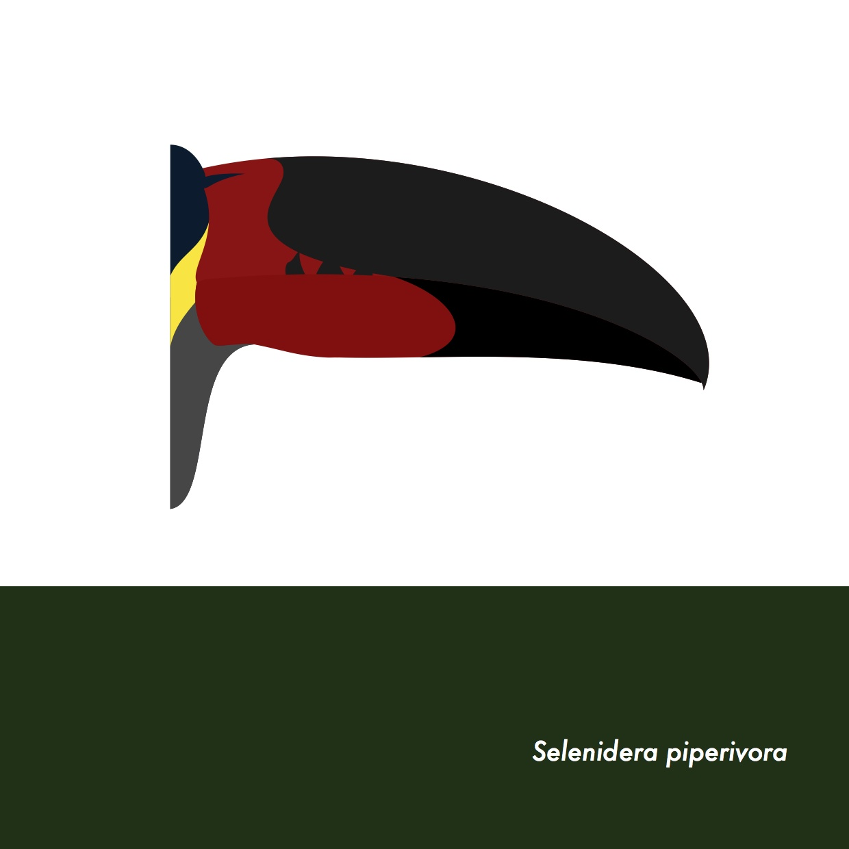 36-SelenideraPiperivora.jpeg