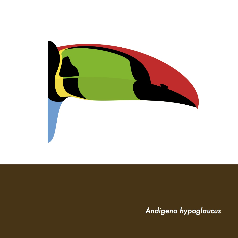 38-AndigenaHypoglaucus.jpeg