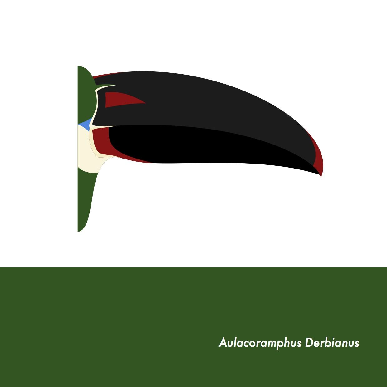 43-AulacoramphusDerbianus.jpeg