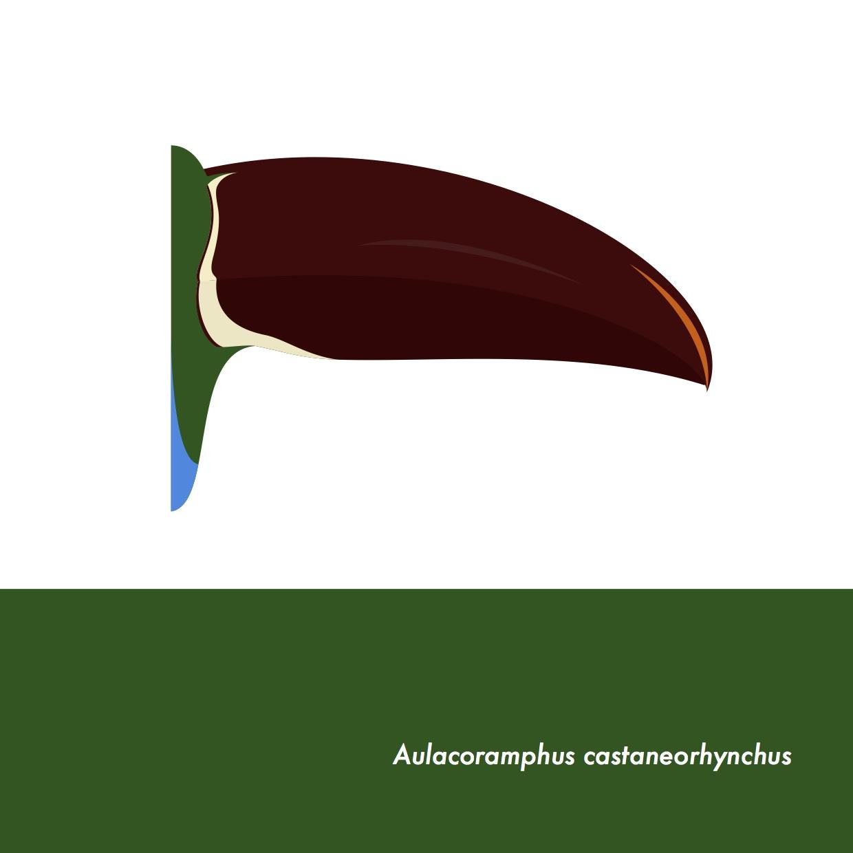 44-AulacoramphusCastaneorhynchus.jpeg
