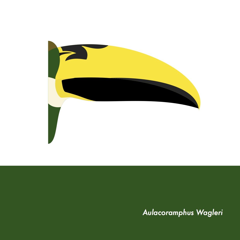 48-AulacoramphusWagleri.jpeg