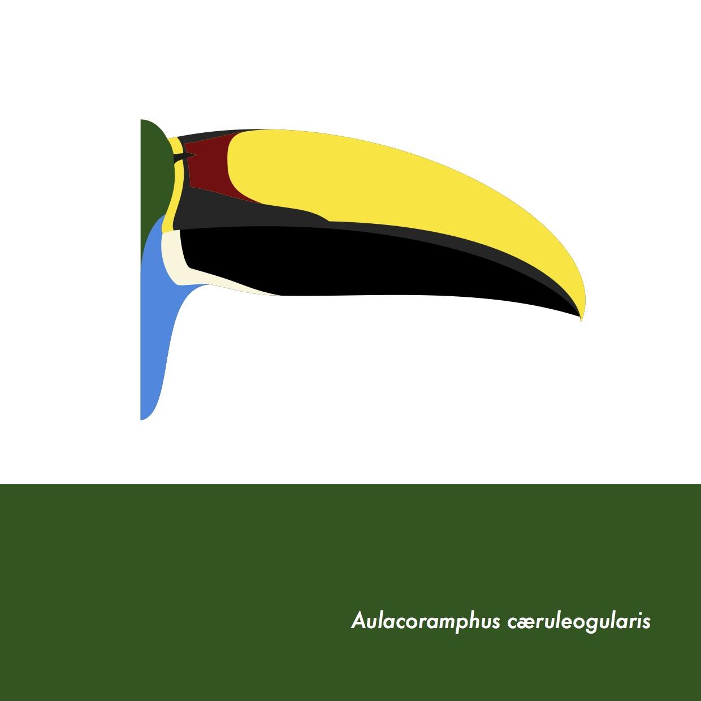 51-AulacoramphusCaeruleogularis.jpeg