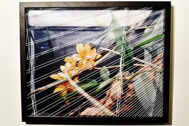 """UPGRADED VIVARIUM, 2016  FLORIAN VIEL  """"Un vivarium est un endroit où l'on garde et on élève des petits animaux vivants en tentant de reconstituer leur milieu naturel ou biotope. Il s'agit le plus souvent d'une cage vitrée, avec un toit ou une face amovible afin de pouvoir accéder à l'intérieur de la cage. Il existe aussi des vivariums grillagés qui sont pratiques pour certaines espèces nécessitant une aération abondante. On y élève le plus souvent des reptiles, des amphibiens ou des insectes mais parfois aussi de petits mammifères."""" Wikipédia  Il [le narrateur de La Jalousie] est d'ailleurs absent du roman, il ne dit jamais ni «je » ni «il » mais parle du monde extérieur. Sa conscience est entièrement tournée vers l'extérieur et il n'observe jamais son intériorité.  Alain Robbe-Grillet, Préface à une vie d'écrivain,2005  Photographie encadrée, vitre peinte 43 x 53 cm  1200 Euros"""