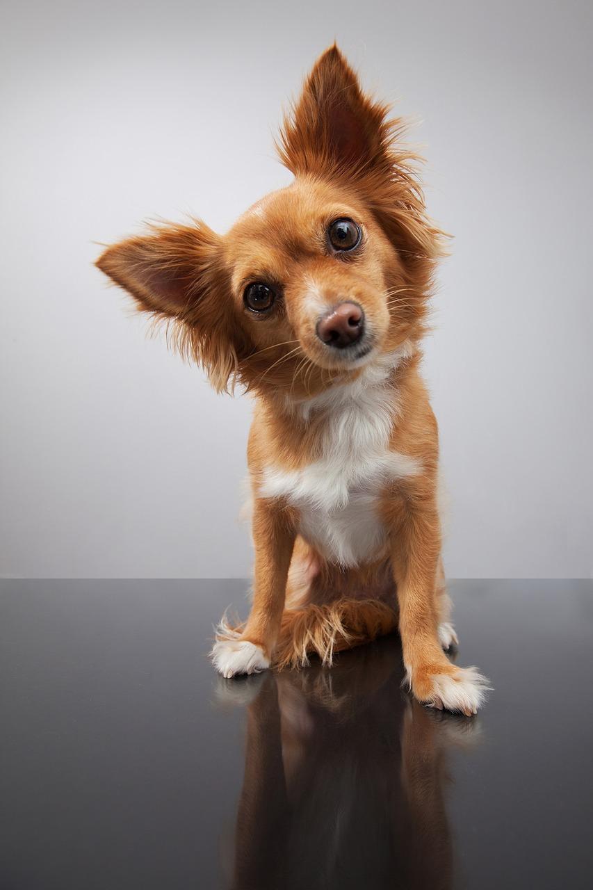 dogquestions.jpg