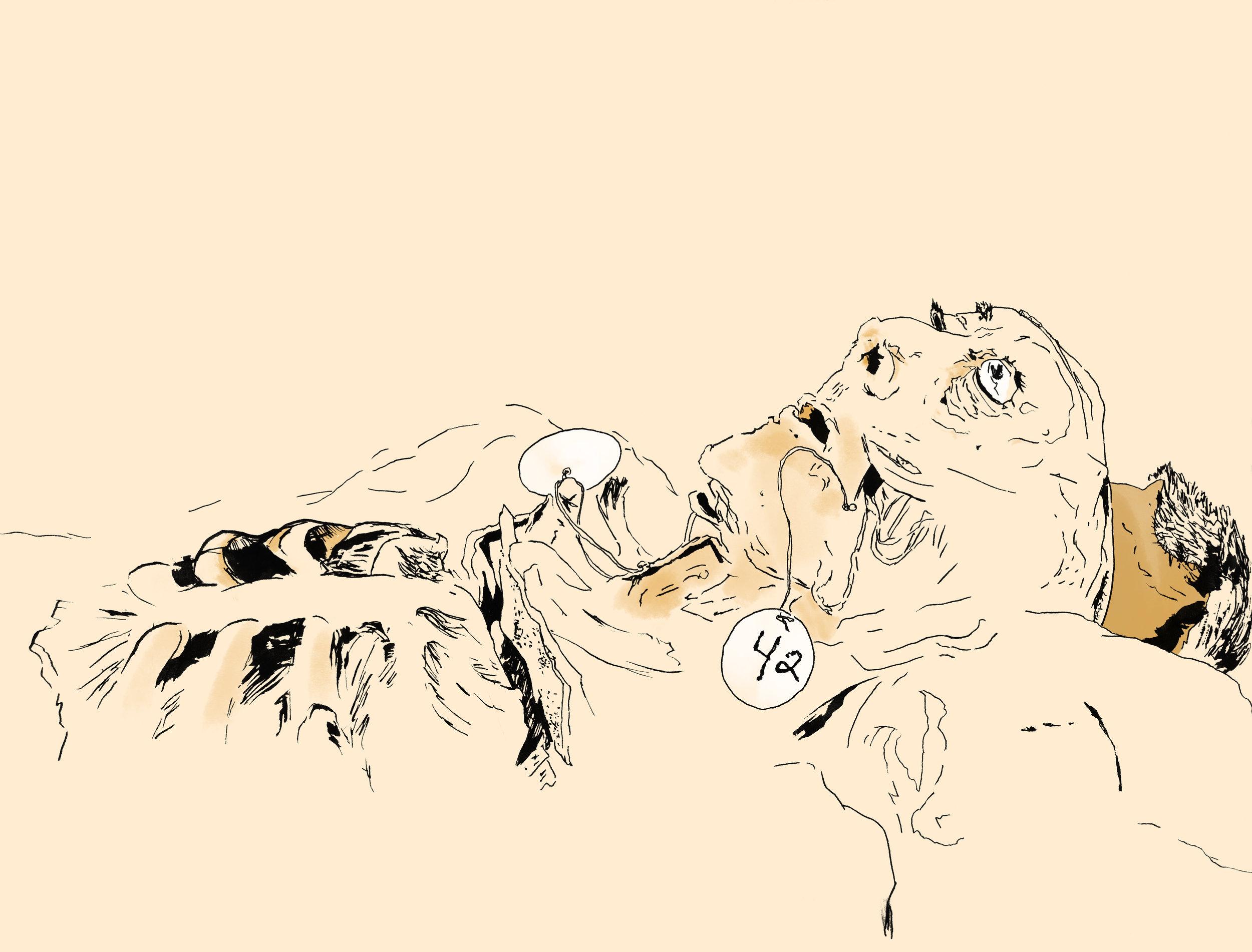 Touro - face ribs.jpg