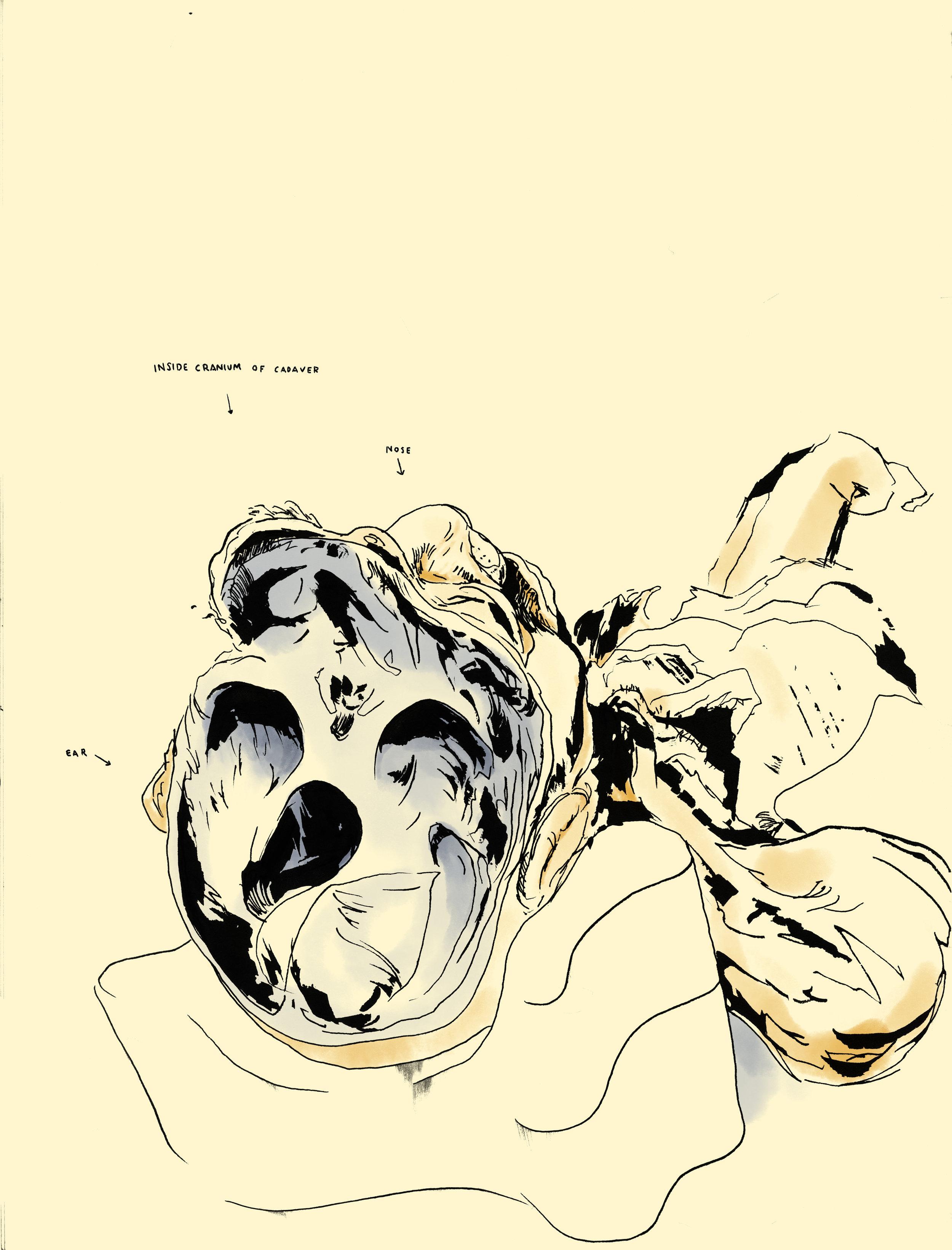 Touro - Inside skull.jpg