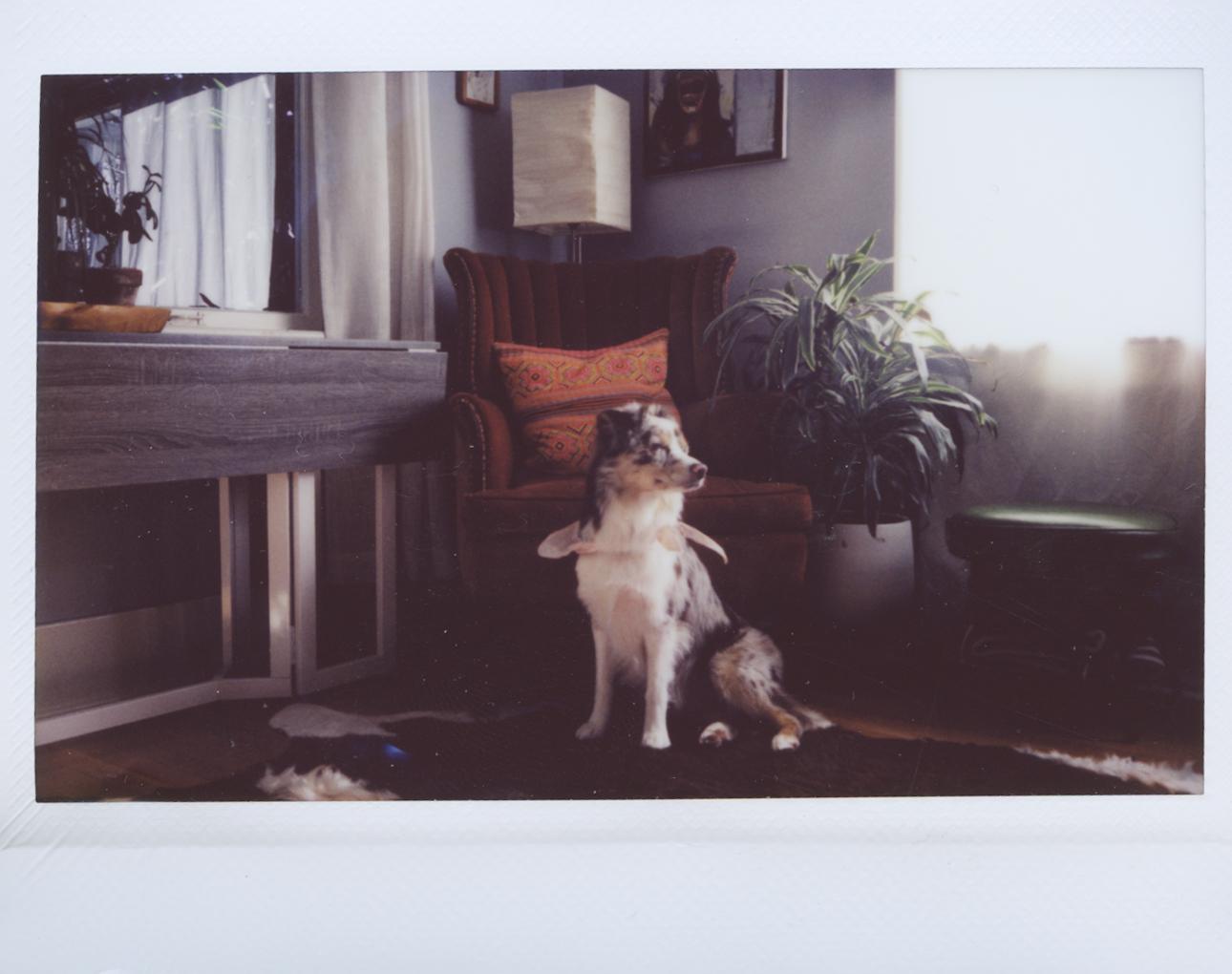 Polaroid Scans1.jpg