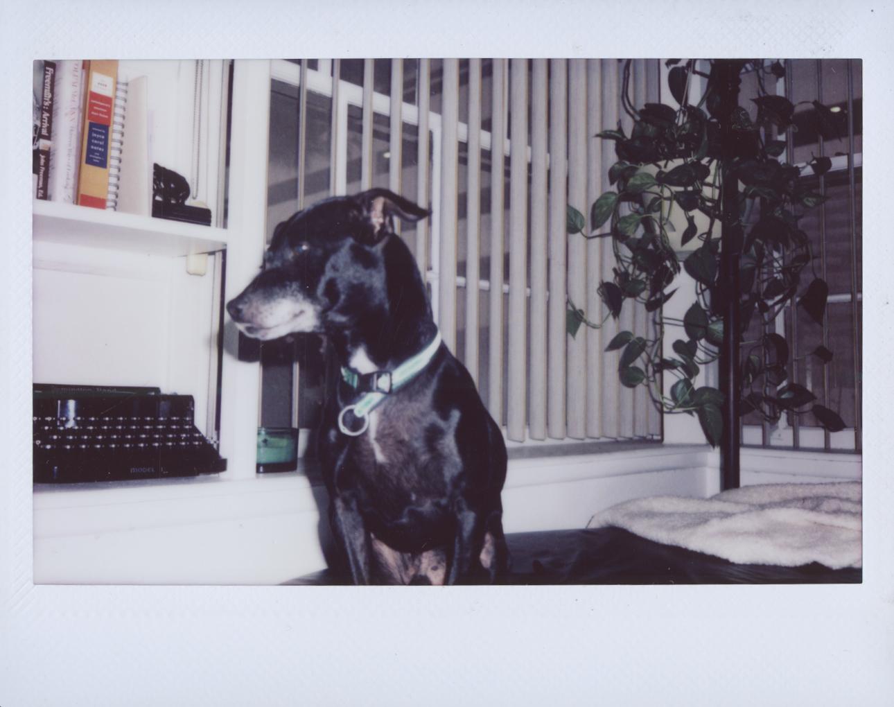 Polaroid Scans56.jpg