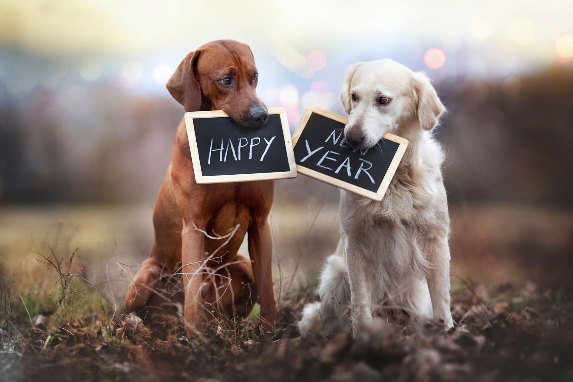 happy-new-year-dogs-tablets.jpeg