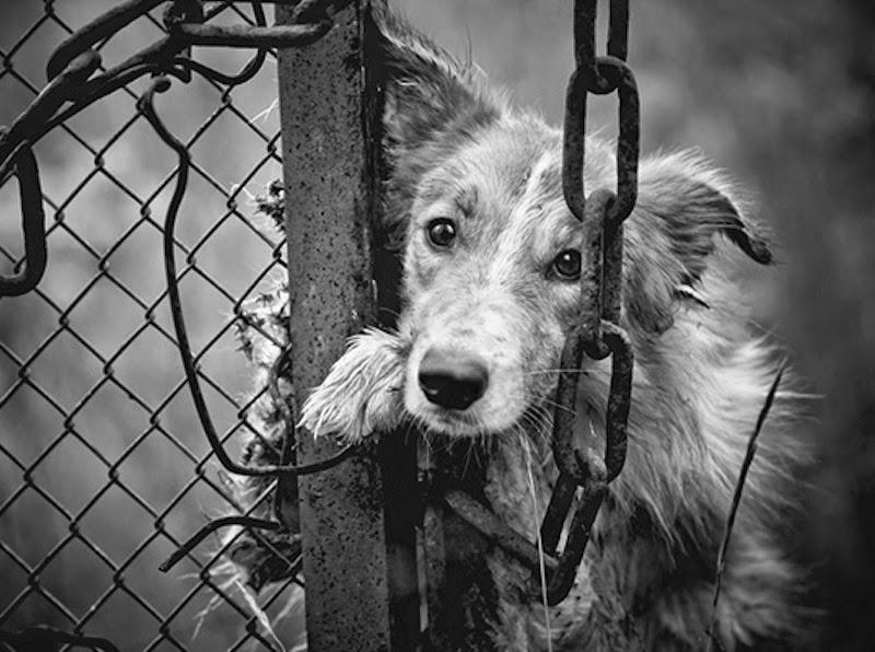 Yulin-dog-eating-festival.jpg