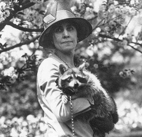 Mrs. Coolidge's pet raccoon