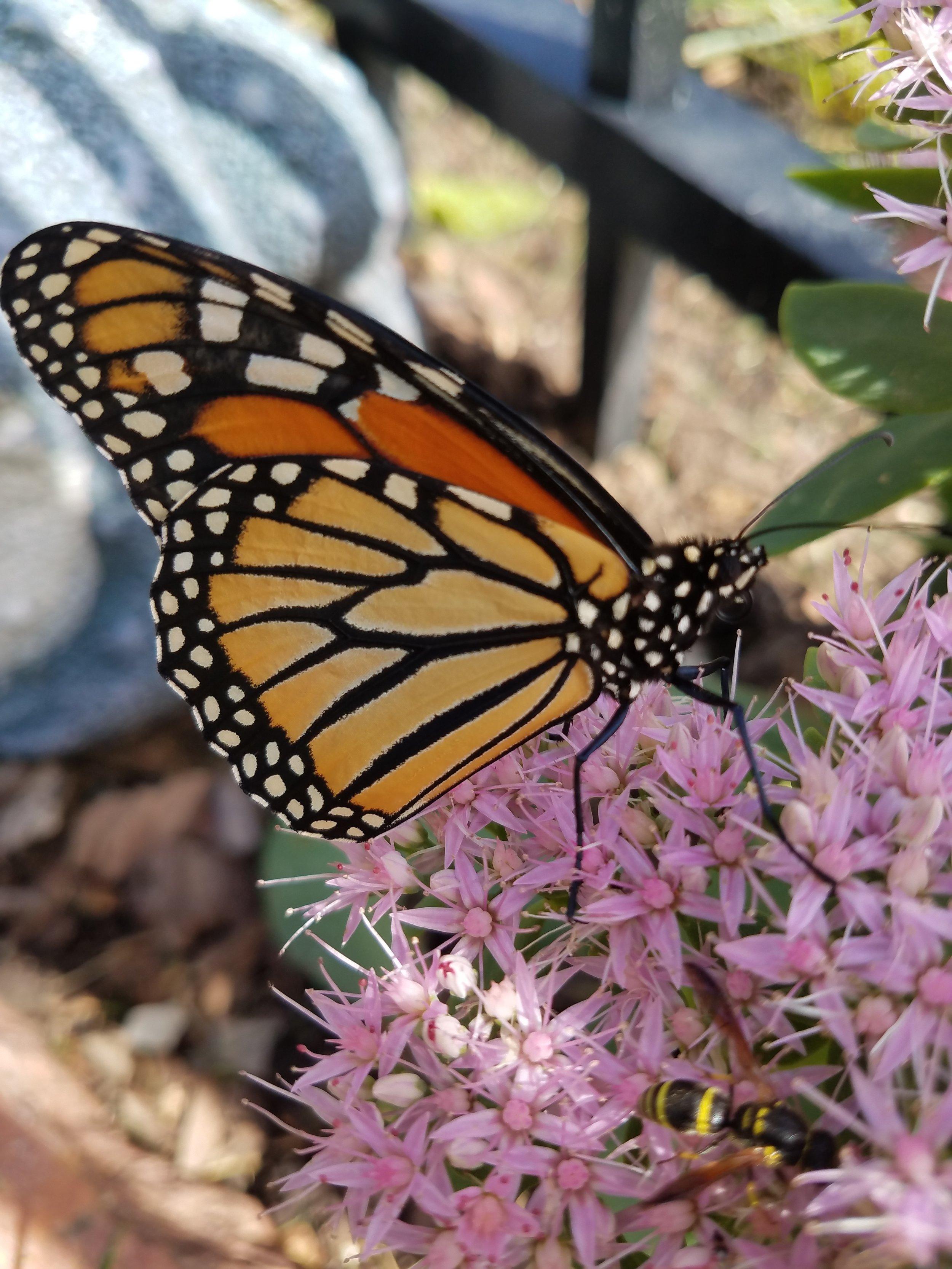 97 Butterflies blog.jpg