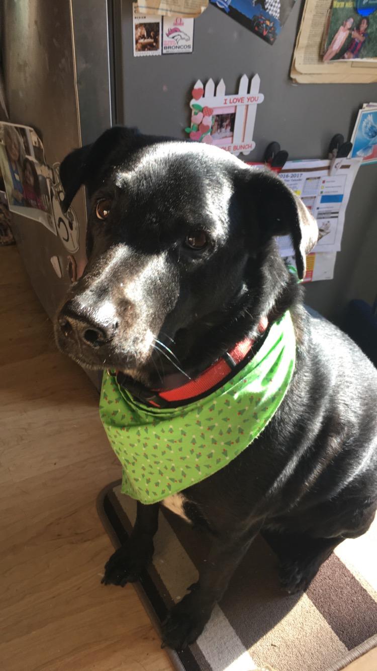 Oscar, All Paws Rescue