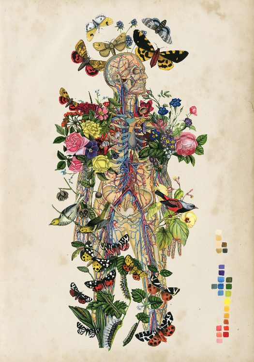 Anatomical Botanical