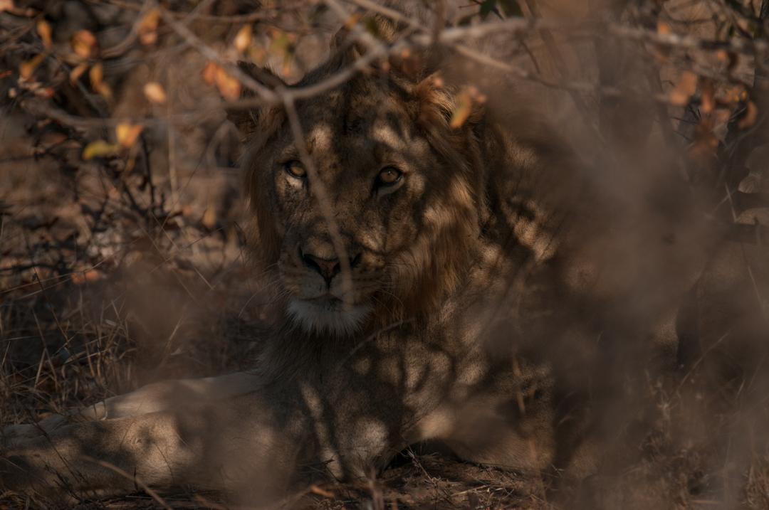 AFRICA-785.jpg
