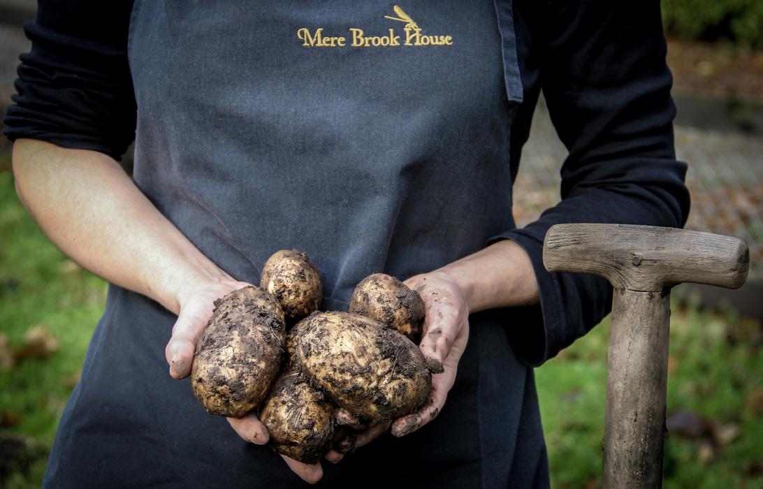 Handfull of Potatoes