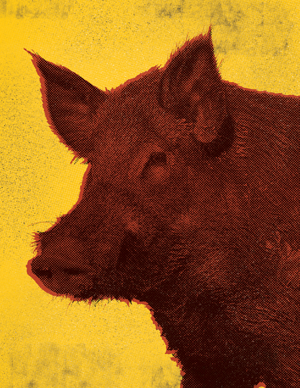 Feral Hog in the style of Andy Warhol