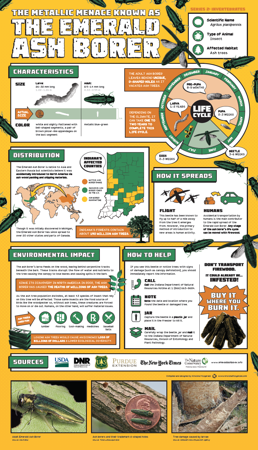 Invasive Species Posters - Emerald Ash Borer