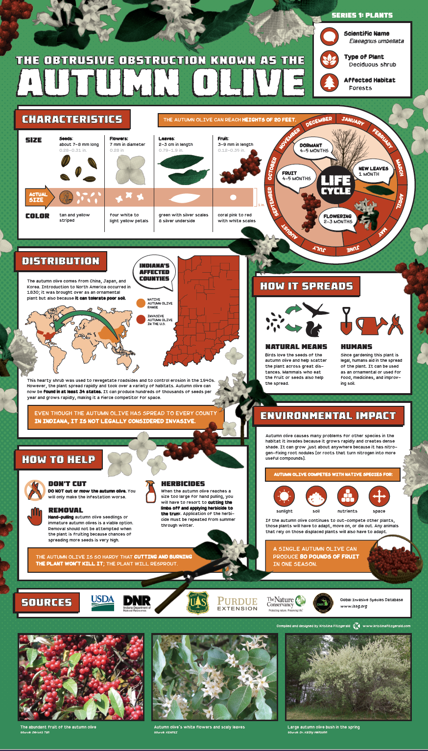 Invasive Species Posters - Autumn Olive