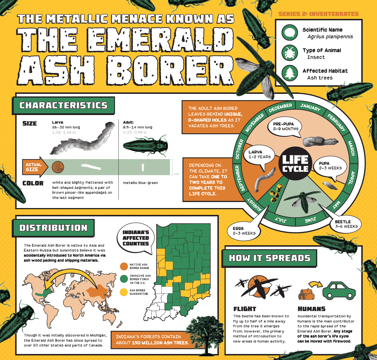 Invasive Species Posters - Emerald Ash Borer detail