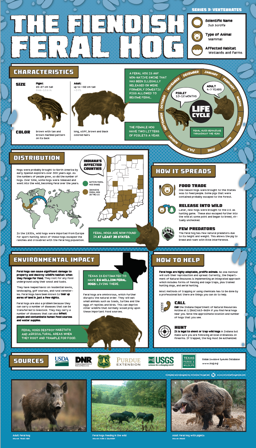 Invasive Species Posters - Feral Hog