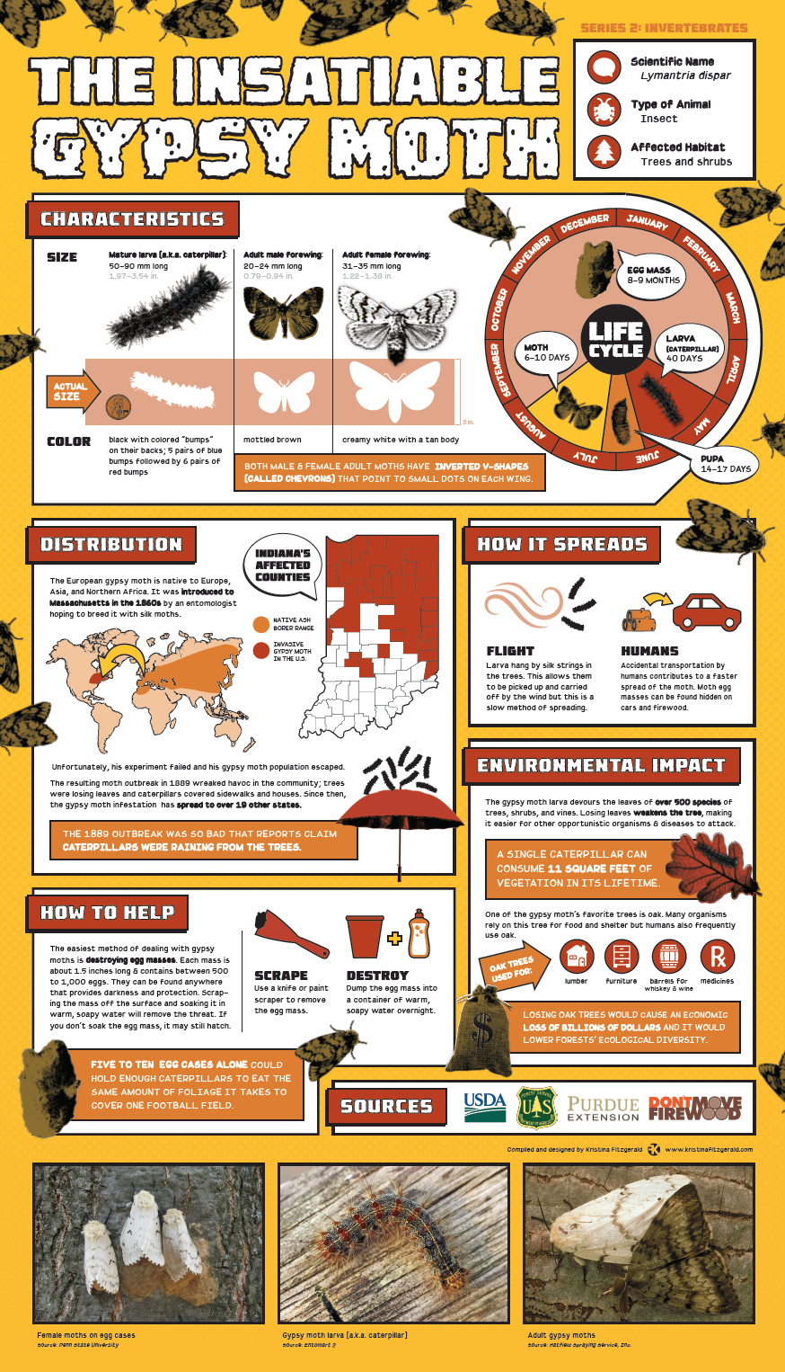 Invasive Species Posters - Gypsy Moth