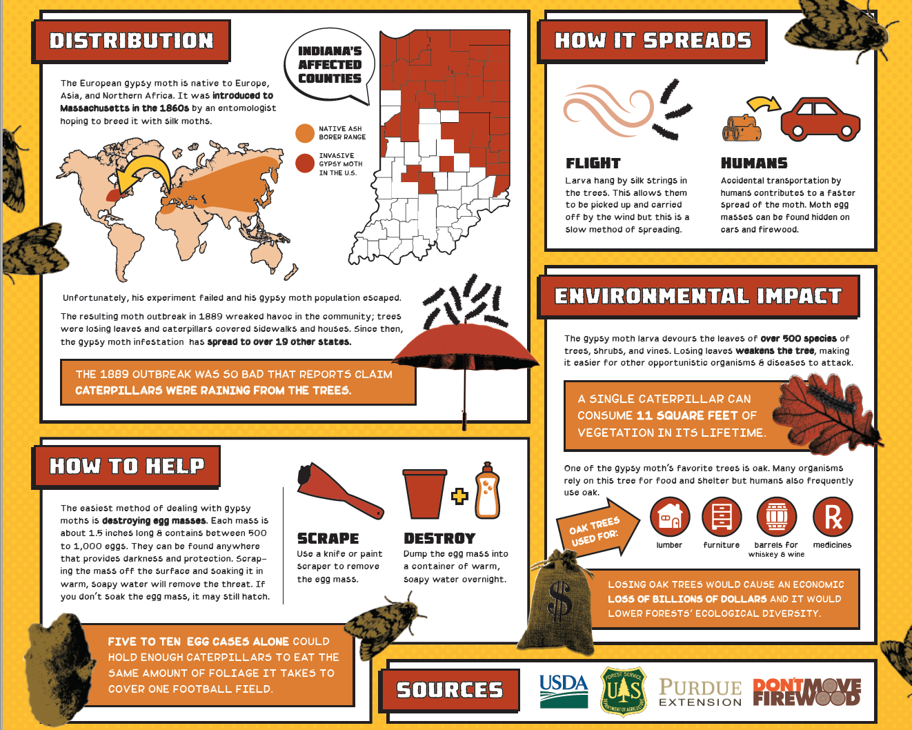 Invasive Species Posters - Gypsy Moth detail
