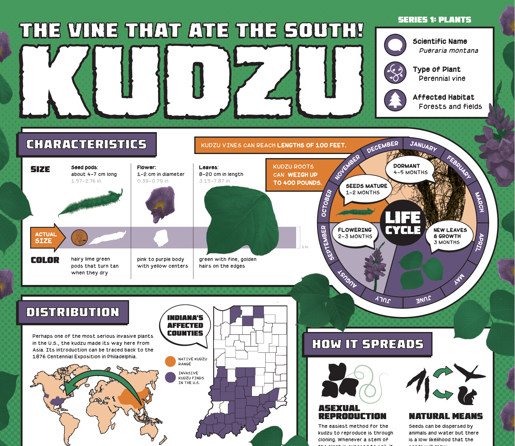 Invasive Species Posters - Kudzu detail